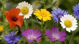 викторина о цветах