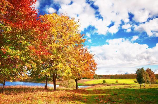 викторина осень